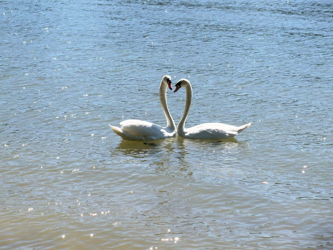 Love at Emma Long Park