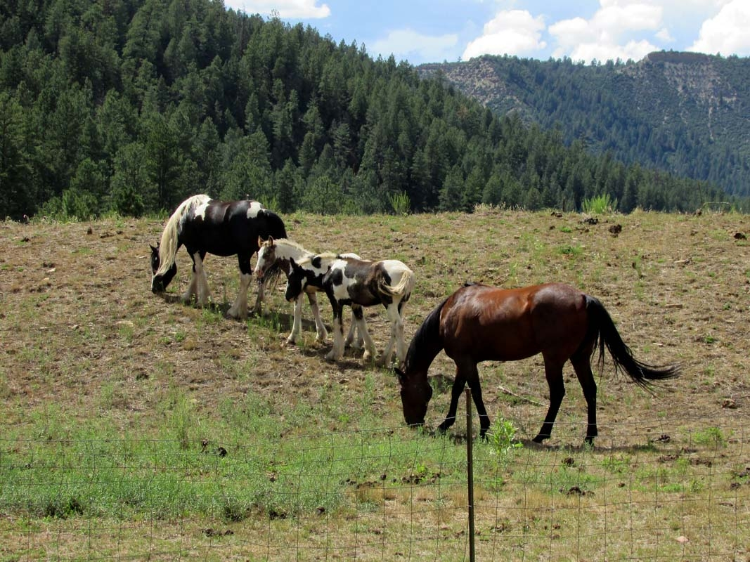 Horses in Colorado
