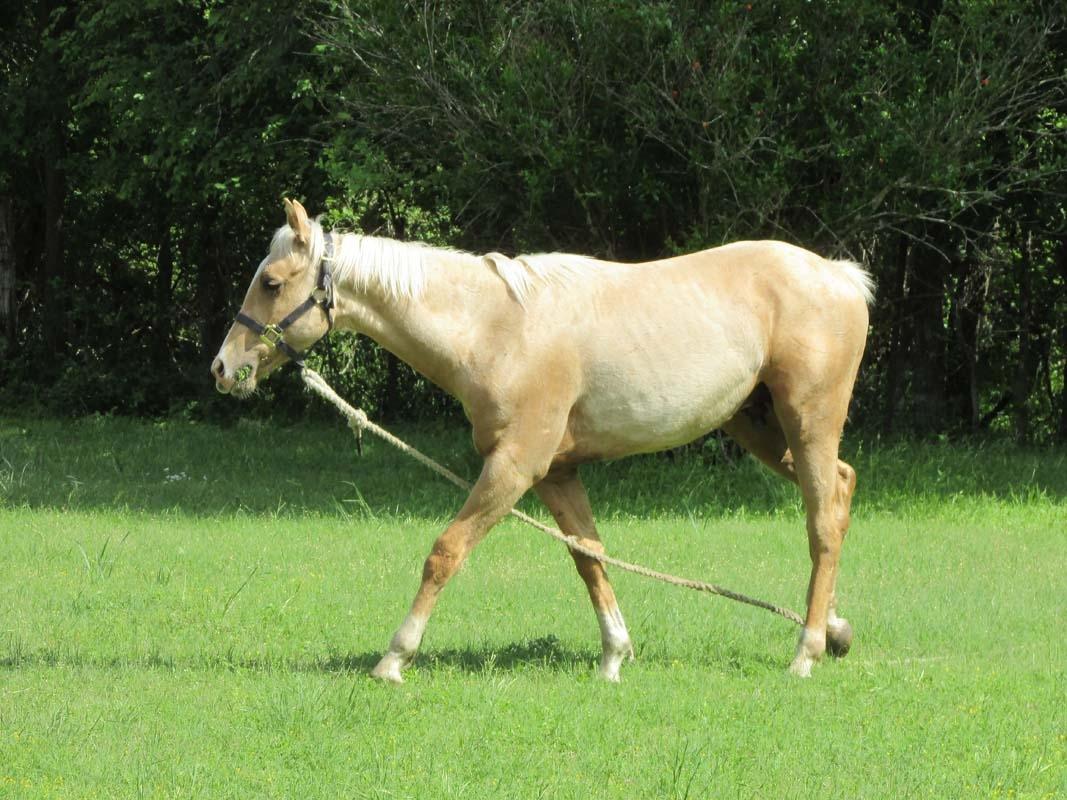 Jailbreak Horse