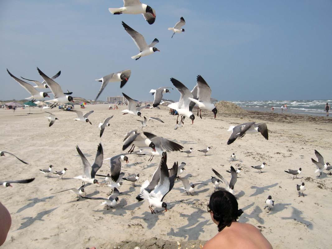 Seagulls in Port A