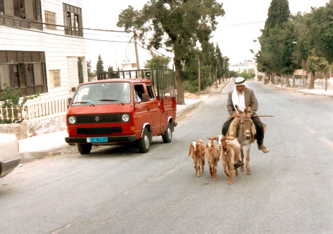 Goat Herding in Ramallah